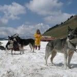 Des chiens de traîneaux au Col des Aravis