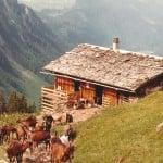 Alpâges de Platuis avec chèvrerie.